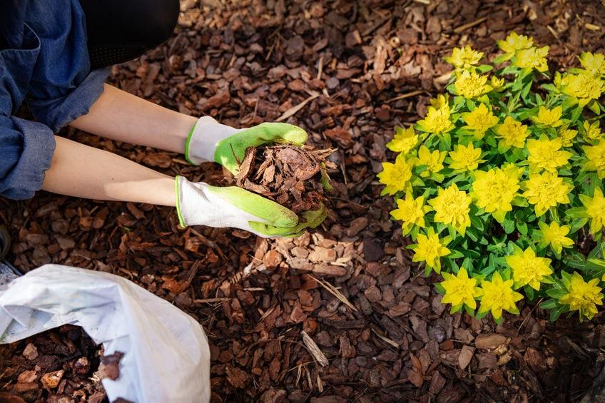 onderhoud beplanting