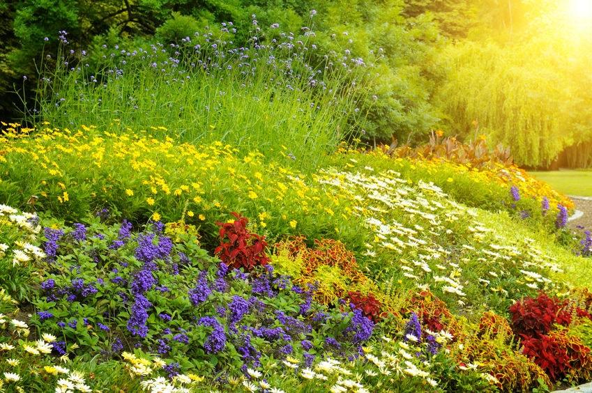 Vaste plantenborder in zonlicht.