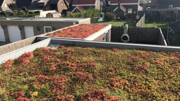 Groen dak op schuur
