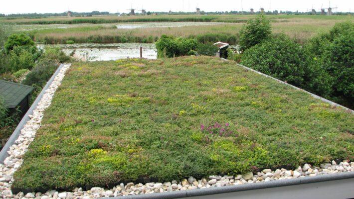 Groen dak op overkapping
